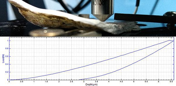 Biological Mechanical Properties of Oyster Shell